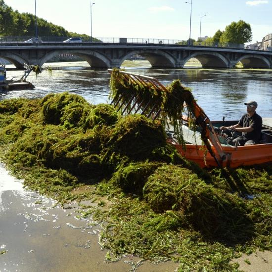 Les faucardeurs pour arracher les élodées dans le Cher à Montluçon...